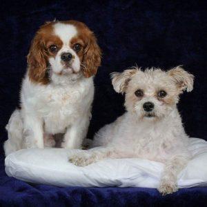 Bella & Mac_300x300