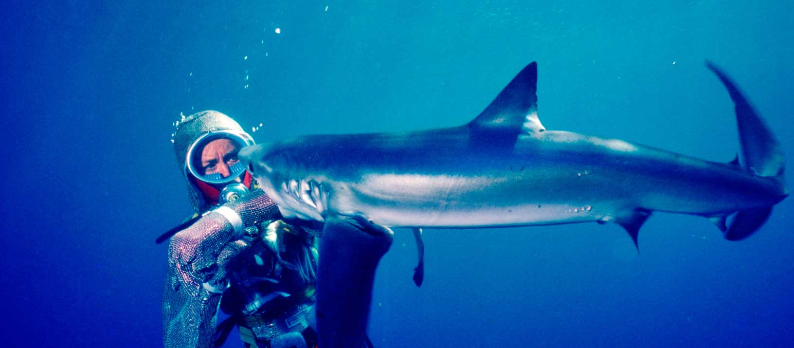 Female diver, Valerie Taylor, underwater in mesh diving suit being bitten on the arm by a shark