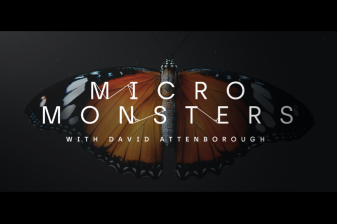 Beautiful butterfly in poster for David Attenborough's Micro Monsters at Doc Edge Festival 2021.